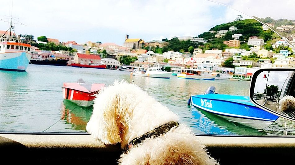 Grenada Maltese Bae  Dog Adventure Nautical Vessel Transportation Mode Of Transport Moored Water Cloud - Sky Beach Sea Harbor Boat Close-up Day