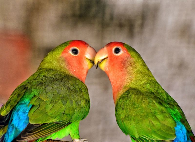 50+ Parrots Pictures HD | Download Authentic Images on EyeEm