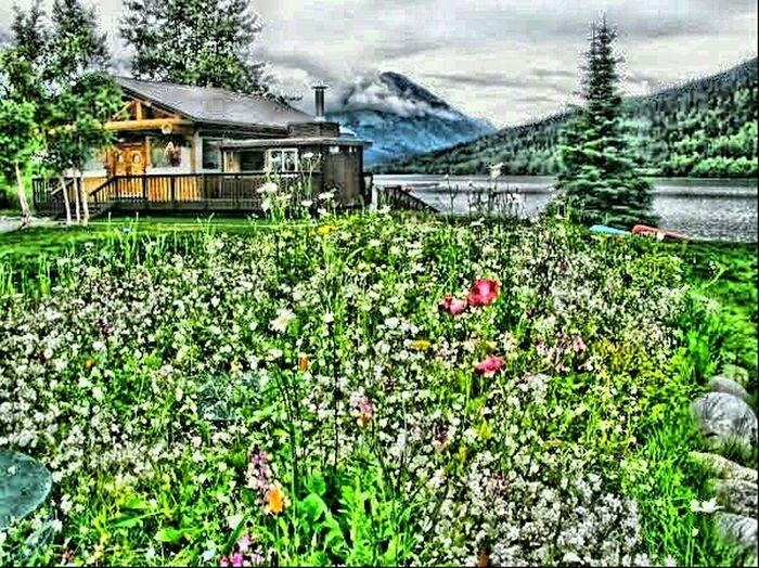 Cabin, Lodge, Plane, Planes, Beaver Plane, Flowers, Garden