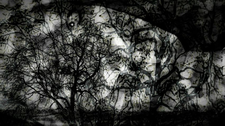 Branches Abstract Art Reshaping Thoughts Eyeemphotography Taking Photos Thought Provoking  Nature_perfection Darkness And Light Your Imaginarium. Unique Perspectives Artistic Expression My Point Of View Treeart Check This Out EyeEm Gallery Double Exposure Beautiful Girl Getting Creative Creative Power Darryn Doyle Today's Hot Look EyeEm Best Edits Black&white Hello World Tree_collection  Cut And Paste Mix Yourself A Good Time