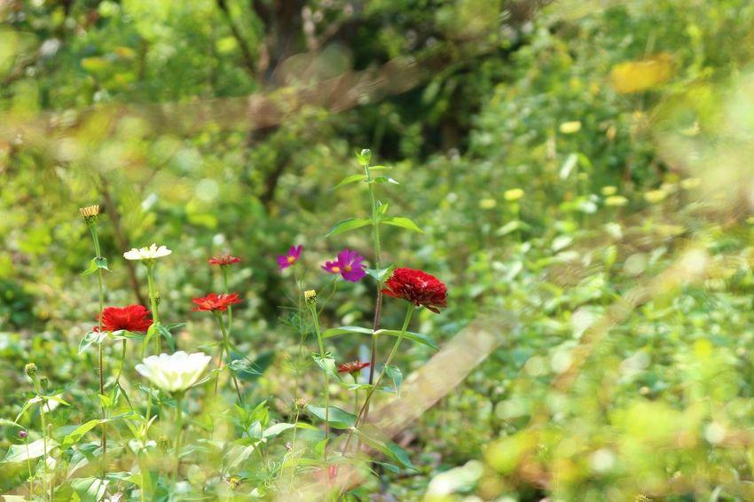 Japan Nature Wood Flower Flower Head Pattern