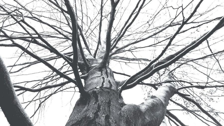 Tree Blackandwhite Valduggia