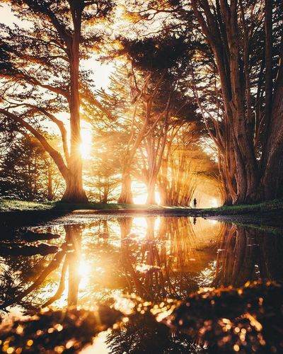 🔼mirror effect 🔽 Reflection Tree Silhouette Tranquil Scene NatureSerenity Aixlesbains Tranquility Sunlight Water Taking Photo Canon_photos First Eyeem Photo Lifestyle Nature_ Collection  Beautyofnature Rhône-Alpes Forest Trees Goodvibes