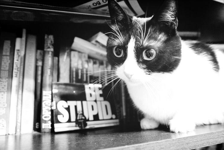 Be Stupid Cat Ilovemycat At Home