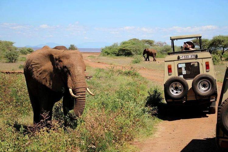 Elephant Outdoors Day Mammal Tree Animal Wildlife No People Safari Animals Nature African Elephant Sky
