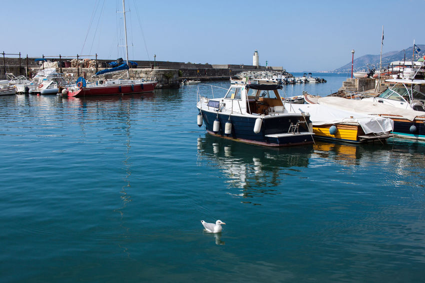 Boat Clear Sky Day Harbor Mode Of Transport Moored Nature Nautical Vessel No People Outdoors Sea Seagull Sky Transportation Water Waterfront Yacht