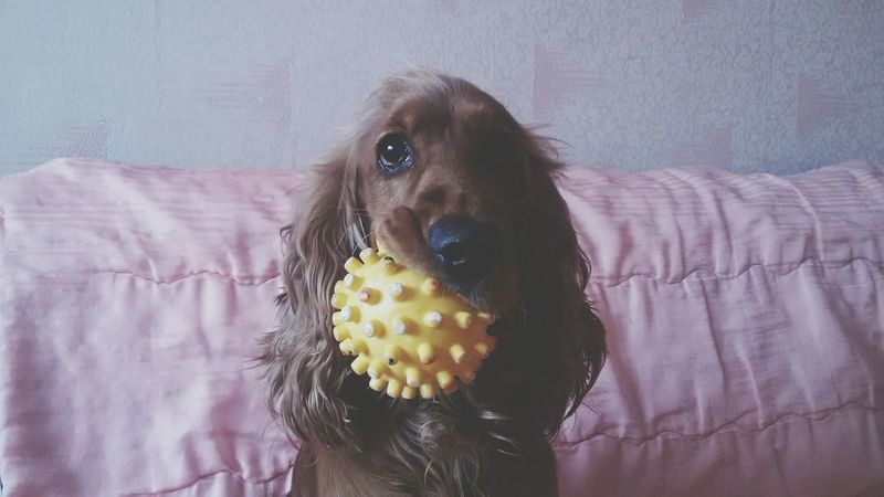 Hello World Cheese! Enjoying Life Hi! First Eyeem Photo Dog Lovedog