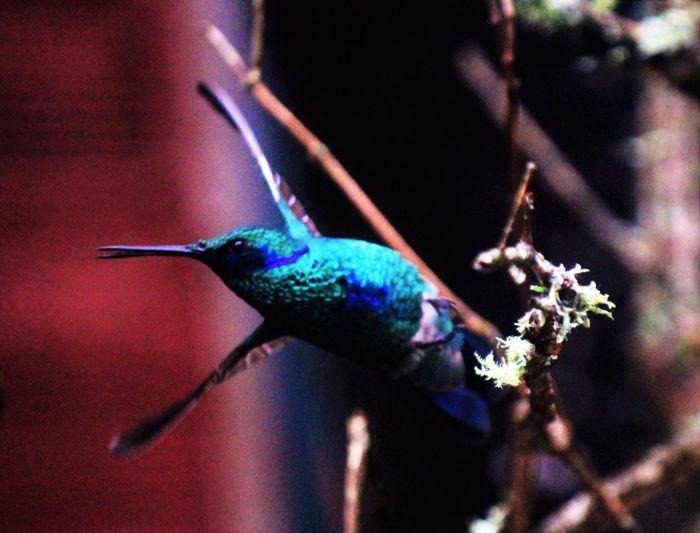 Nature Photography Birds Hummingbird