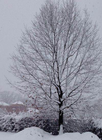 Philadelphia Pennsylvania Snowy Days... Chacha's Eye