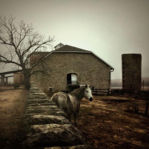 Sprin Hill Farm