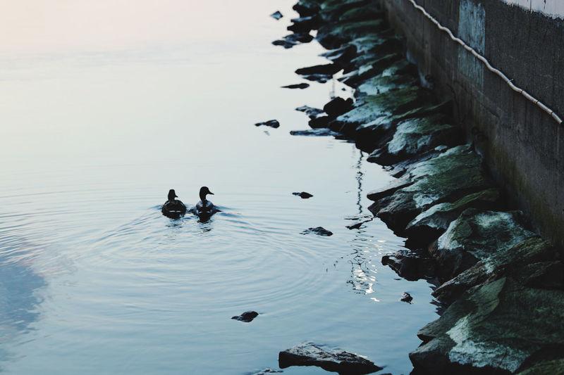 High angle view of ducks on sea