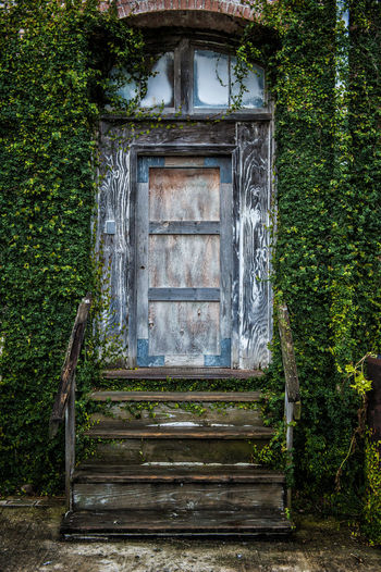 Vintage Door Architecture Building Exterior Built Structure Close-up Day Ivy No People Outdoors Wood - Material
