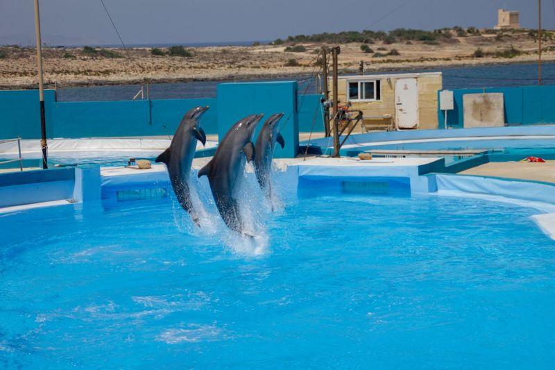 Dolphin Wildlife F2.8 Canon Canonphotography 70-200mm 18-200mm Canon500d Water Pool Swimming Pool Blue Nature Day Splashing Jumping Sea Sky No People Animal