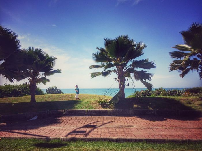 People Running Beach Sun Tree First Eyeem Photo