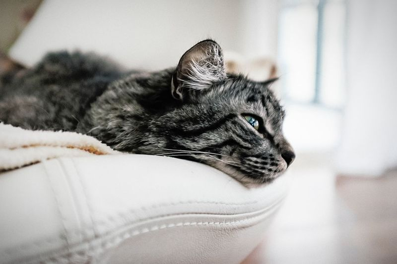 Close-up side view of a cat resting on couch