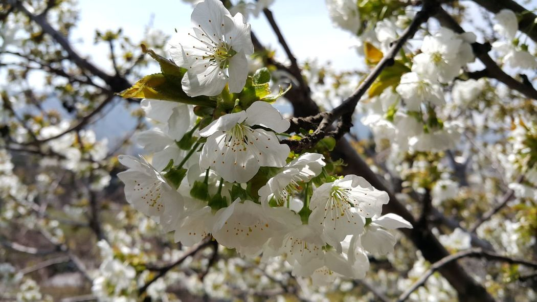 Urban Spring Fever Showcase April