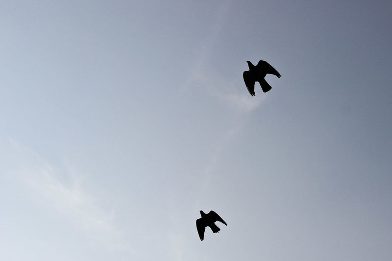 Twin fly. Bird Birds Fly Flying Silhouette Silhouette And Sky Sky