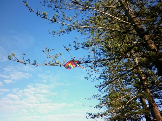 Caloundra Lost Toys. Flying A Kite