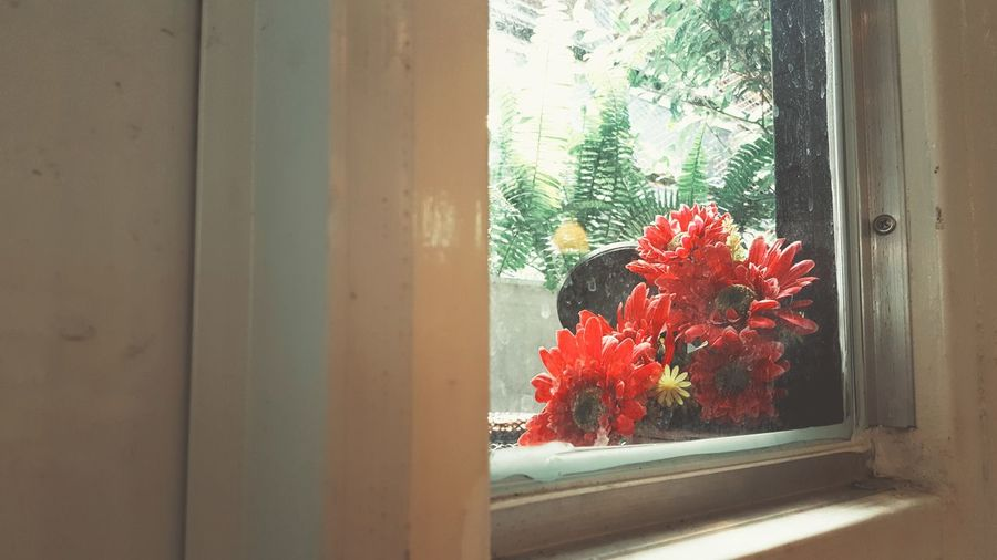 Flower Window Red Indoors  Looking Through Window Day No People Pink Light Romantic Chill Peace Calm Love Copyspace Glass Valentine