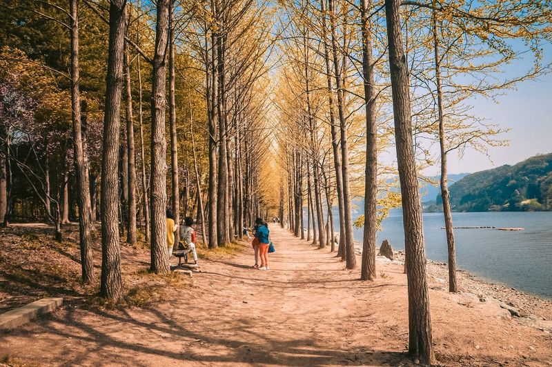 People relaxing by trees by lake