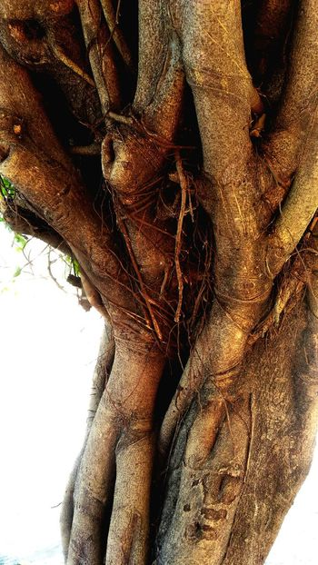 Close-up Nature Tree Tree Trunk Plant Nature No People ZenfoneSelfie