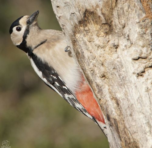 Birds Animal Animals Nature Looking At Camera Bird Photography Animalphotography Sun Perching Ocell Aves Ave Nikon Nikonphotography Bird Perching Tree Animal Themes Close-up Bat - Animal Pollination Woodpecker Woodpecker Symbiotic Relationship Butterfly - Insect Moth Dragonfly Bird Feeder Butterfly Insect