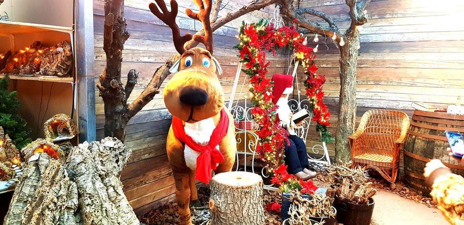 2017 Slitta Renne Winter Luci Christmas Freddo Nature Ghiaccio Bianco Natale  Neve Natale 2017 Architecture Pacchi Regali Ghiaccio Inverno 2017 Vintage Slittadibabbonatale BabboNatale Window Renna