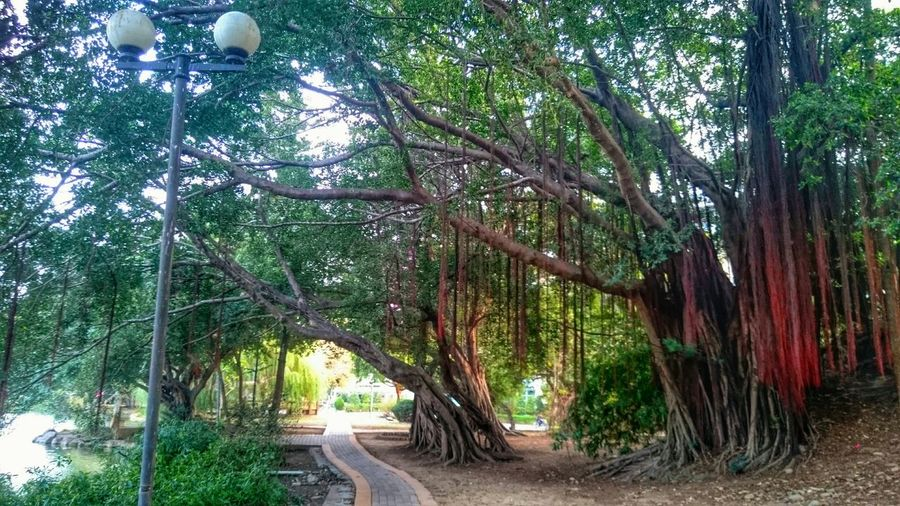 National Chung Shing University Taichung, Taiwan Hugging Trees Nature Connected With Nature