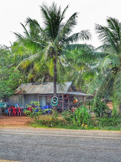 Shop in Cambodian countryside Asian Countryside Cambodia Commerce Shop Palm Tree Tree Beach Tropical Climate Growth Vacations Day Travel Destinations