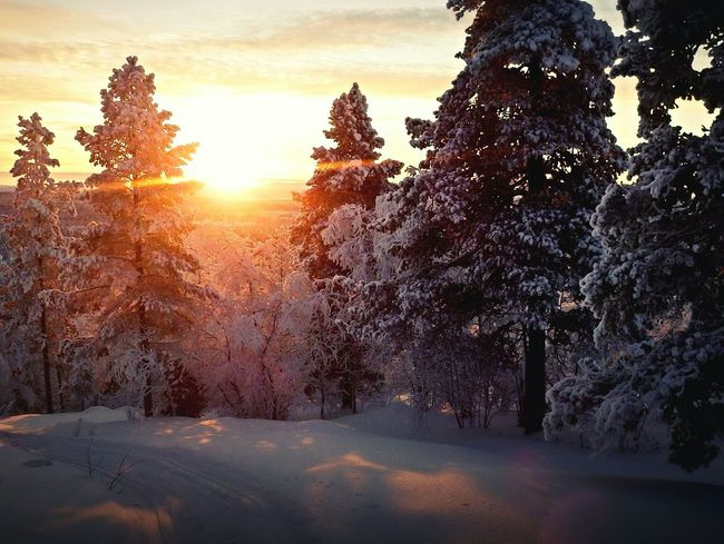 Sunset. Right place, right time Sunset EyeEm Nature Lover EyeEm Best Shots Adventure Nature EyeEm Best Shots - Nature Showcase: December Cold Woods Forrest Forrest Photography Nature Photography Mood Beautiful Snow WheaterPro: Your Perfect Wheater Shot