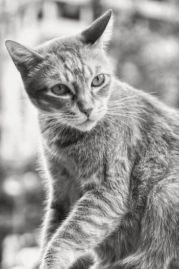 Pets Animal Themes One Animal No People Close-up Outdoors Black And White Hong Kong Sony Tim Wong Sitting Cat
