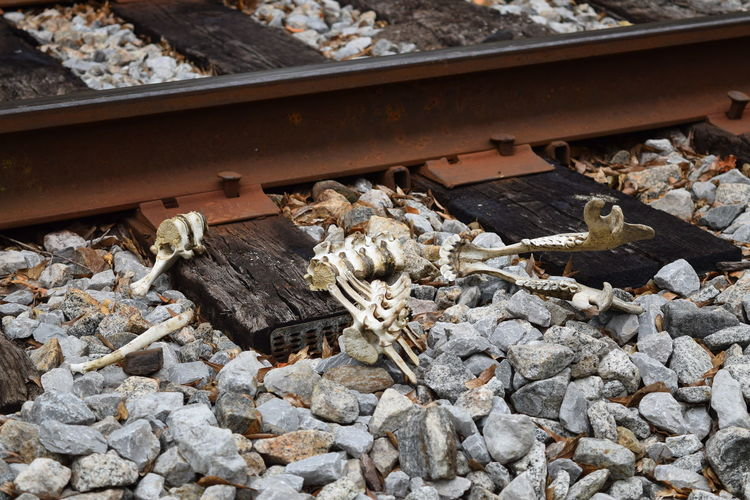 Hope this is not to disturbing for some. Death & Decay Nature Outdoors Train Kill Train Tracks Railway Track Railroad Track Lowndes County Alabama Alabama Wildlife Managment Lowndes County Alabama