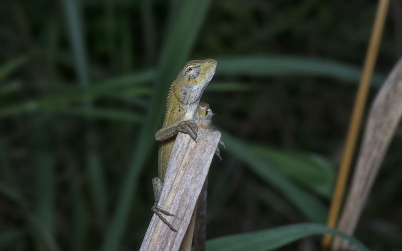 Close-up of lizard on wooden post