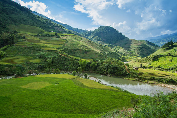 Rice fields on terraced in rainny season at Mu Cang Chai, Yen Bai, Vietnam. Rice fields prepare for transplant at Northwest Vietnam Beauty In Nature Cloud - Sky Curve Day Green Color Landscape Mountain Nature Sky Terraced Tourism Travel Destinations Tree Water