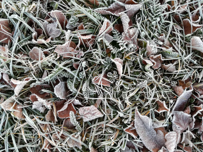 """""""winter is coming"""" Backgrounds Beauty In Nature Close-up Day Fragility From Above  Frost Grass Growth High Angle View Hoarfrost Leaves Nature Nature Nature_collection No People On My Way To Work Outdoors Plant Plant Plants Reif This Week On Eyeem Wildlife & Nature Winter"""