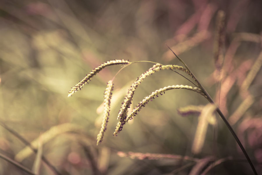 Beauty In Nature Close-up Day Focus On Foreground Grass Growth Nature No People Outdoors Plant Summer Grass Summer Grass Morning Grass Sunlight Sun Tranquility