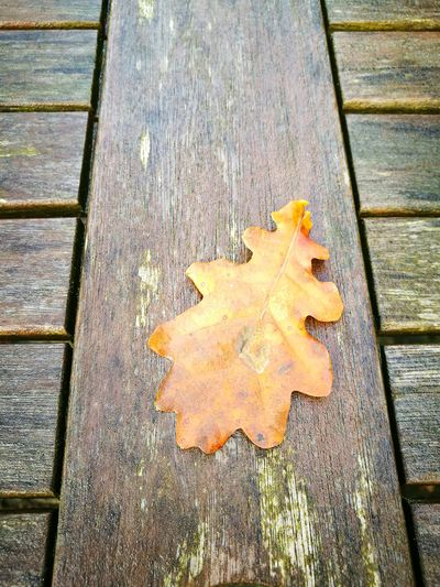 High Angle View Day Autumn No People Outdoors Leaf Close-up Water Nature