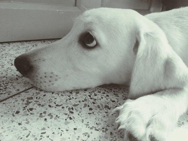 Check This Out Pet Labrador Pet Photography