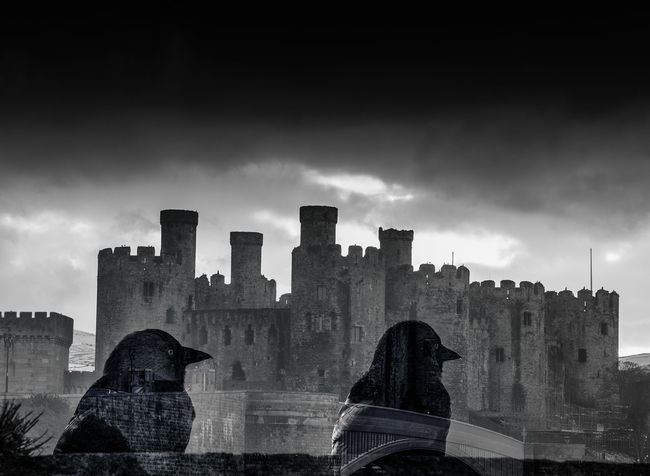 Jackdaws and Conwy Castle Conwy Castle Double Exposure Jackdaws Ancient Ancient Civilization Architecture Building Exterior Built Structure Castle City Cityscape Cloud - Sky Day Doubleexposure History Jackdaw Low Angle View No People Old Ruin Outdoors Sky