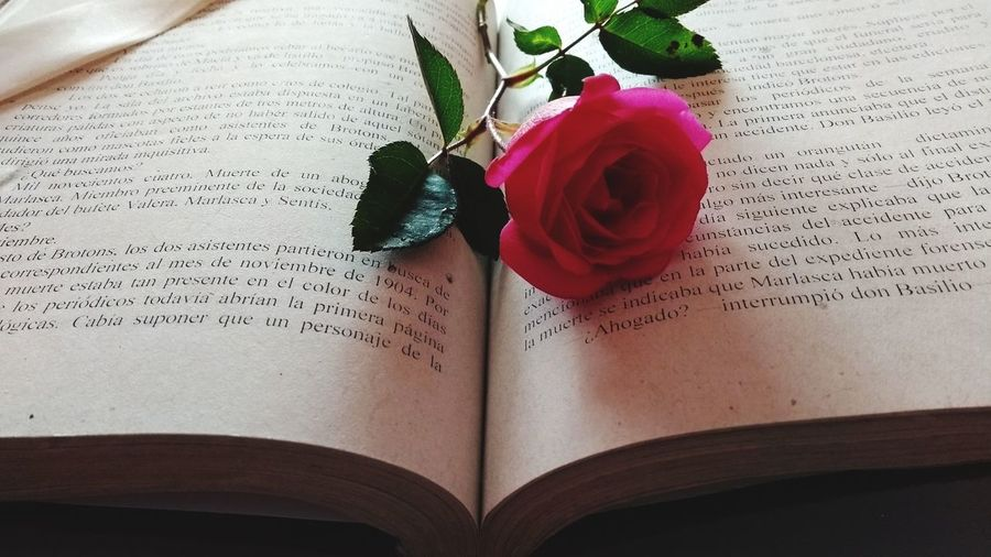Book & Rose Book Still Life Text No People Book & Roses Eunice-Cravioto Pink Color Paper Rose - Flower Flower Mexico De Mis Amores Nature