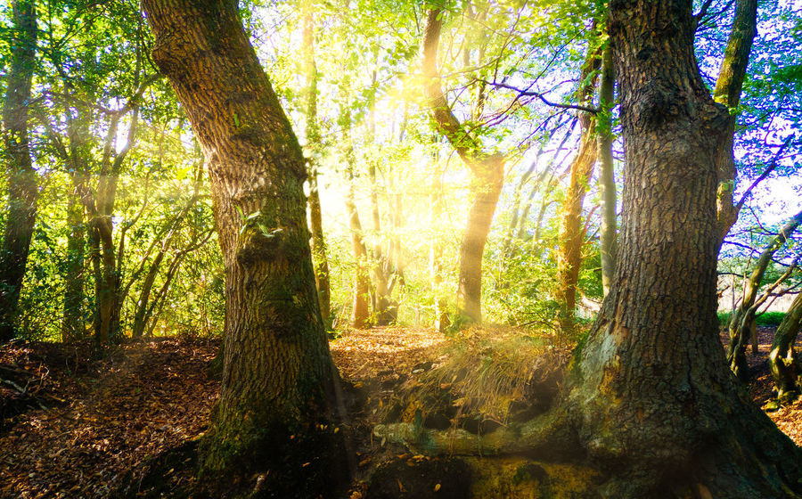 Beauty In Nature Bright Day Environment Forest Land Landscape Lens Flare Nature No People Non-urban Scene Outdoors Plant Scenics - Nature Springtime Sun Sunbeam Sunlight Tranquil Scene Tranquility Tree Tree Trunk Trunk WoodLand