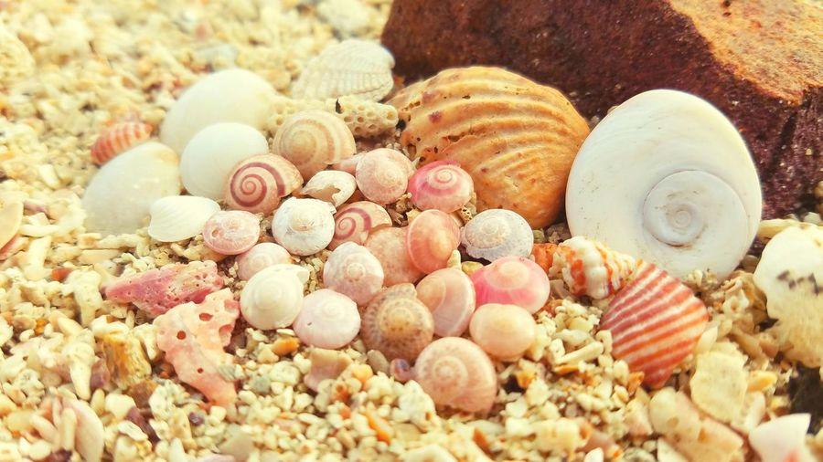 Seashell Beauty In Nature Beach