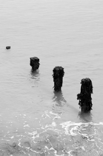 Four Pillars Black & White Seaweed Blackandwhite Day Nature No People Outdoors Posts Sea Sea Defences Tranquility Water Waterfront Waves