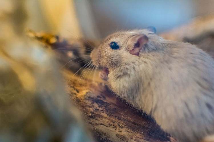 Close-up of mouse