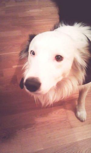 Beautiful Dog Macho