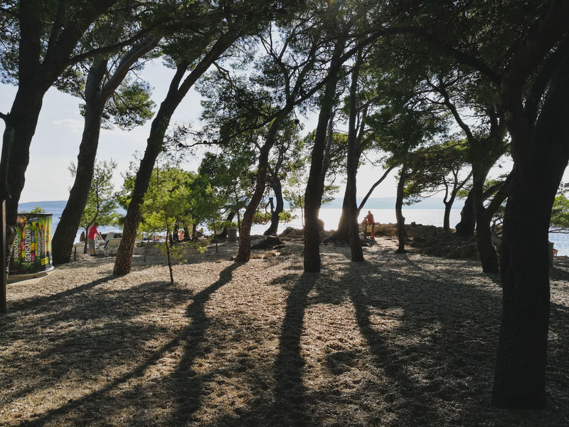 Brela  Pines Croatia HuaweiP9