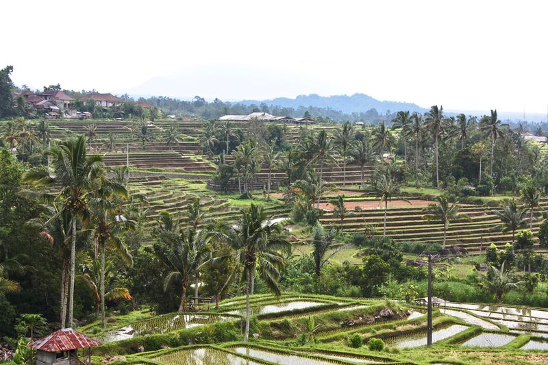 Bali, Indonesia Jatiluwih Rice Terrace Rice Paddy Travel Photography Agriculture Baliphotography Beauty In Nature Field Growth Landscape Nature Outdoors Rice Field Rice Terraces Rural Scene Scenics Tranquility