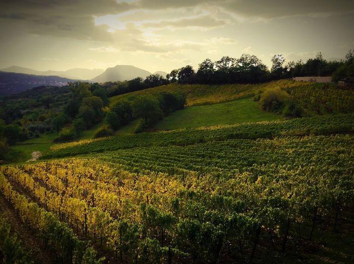 Italy Italia Vino Wine Paesaggio Landscape Campania Avellino The Great Outdoors - 2016 EyeEm Awards