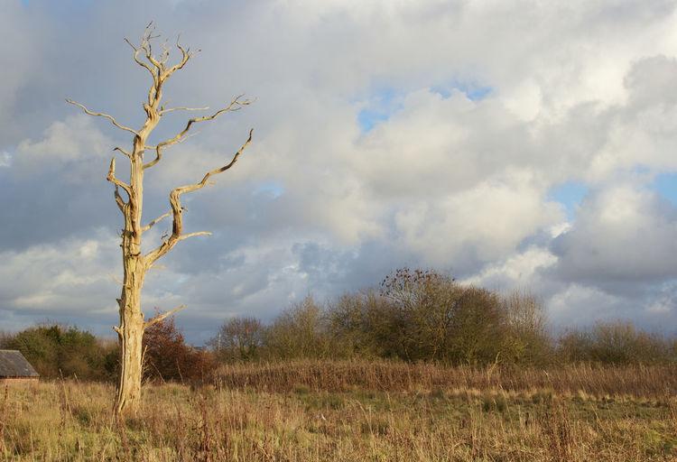 Dead Tree Tree Rural Scene Sky Landscape Plant Cloud - Sky Branch Bark Single Tree Dead Plant