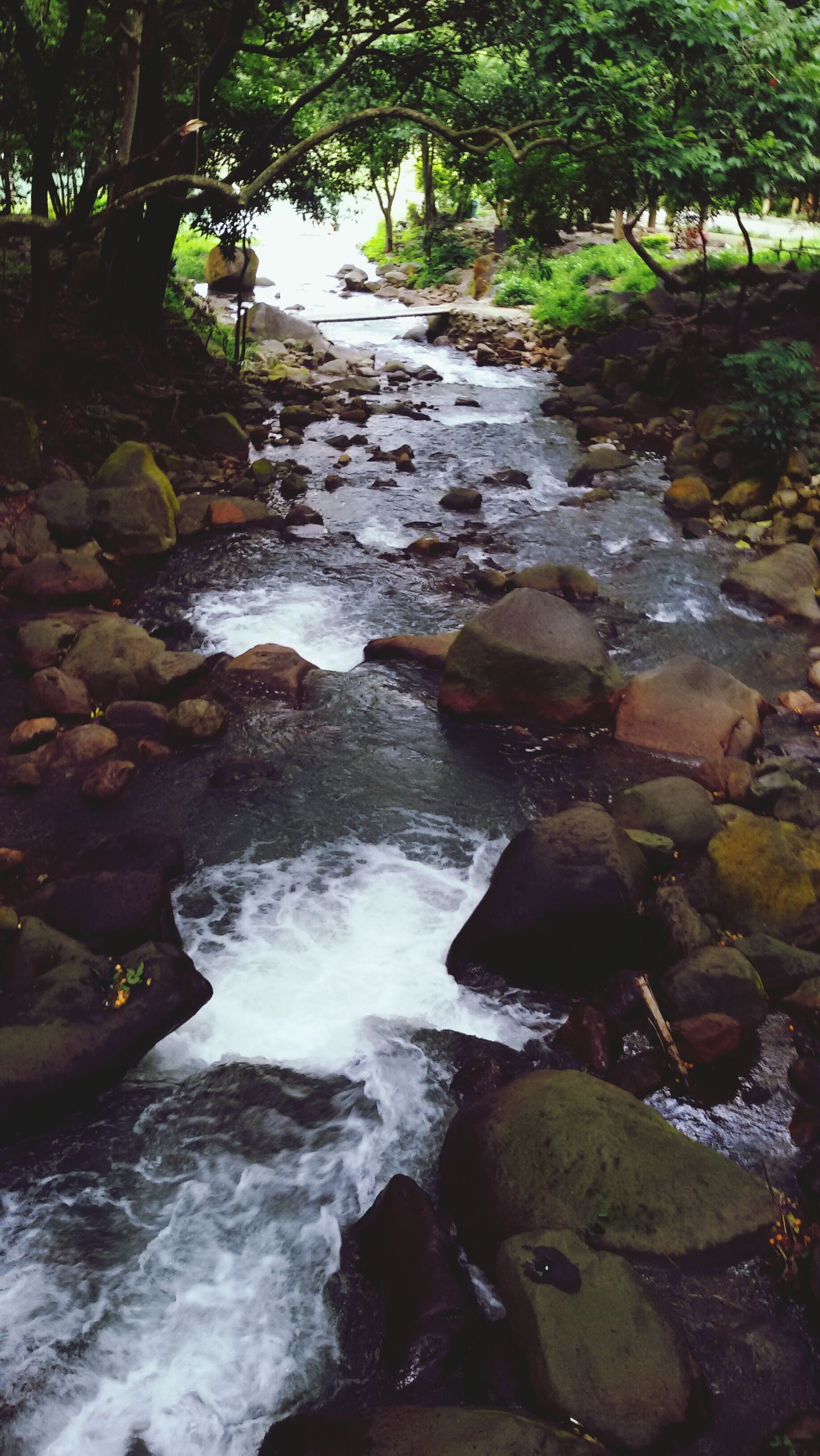 water, flowing water, rock - object, flowing, stream, motion, forest, beauty in nature, nature, tree, waterfall, scenics, river, long exposure, tranquility, tranquil scene, outdoors, day, rock, no people